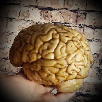 Life Size Human Brain