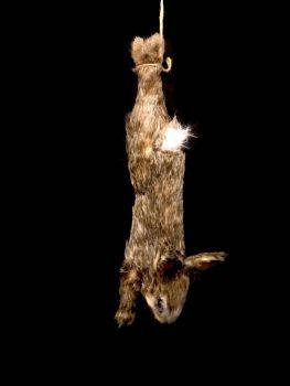 Animal Prop Rabbit Hanging