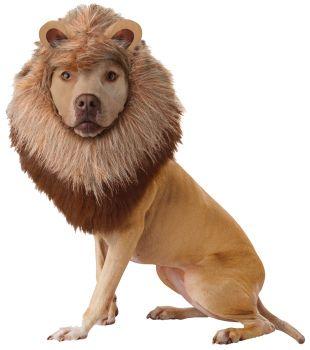 Lion Dog Costume - Pet Large