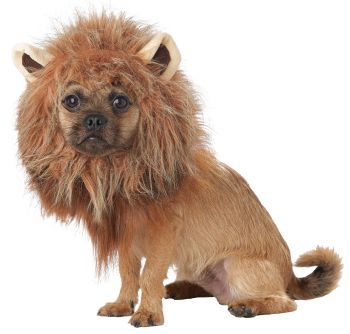 King Of Jungle Dog Costume - Pet Large