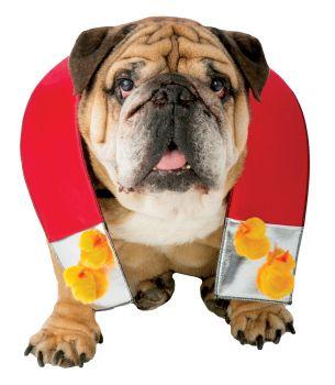 Zelda Chick Magnet Dog - Pet XS/X