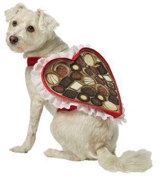 Chocolate Box Dog Costume - Pet X-Small