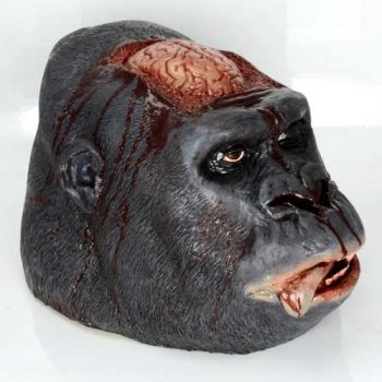 Gorilla Head Brain Autopsy