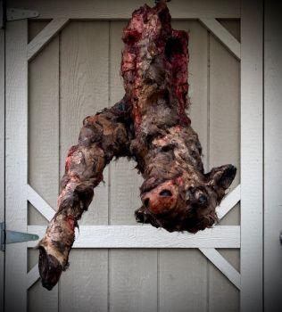 1/4 Rotten Calf Prop