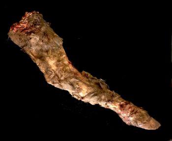 Rotten Calf Leg
