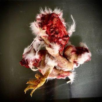 Animal Prop Chicken Combo 3 Piece