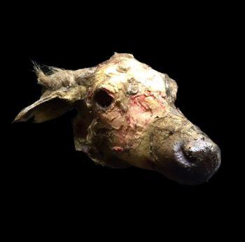 Animal Prop Rotted Deer Head