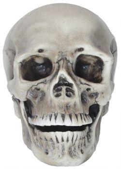Realistic Rotting Skull